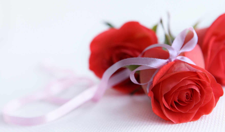 подарок, красная, роза, белый, лента, розы, картинка, free, красные,