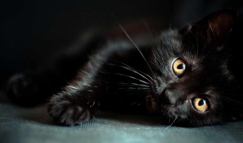 wallpaper, черный, мордочка, котенок, глазки, cat, wallpapers, cats, изображение, hdr,