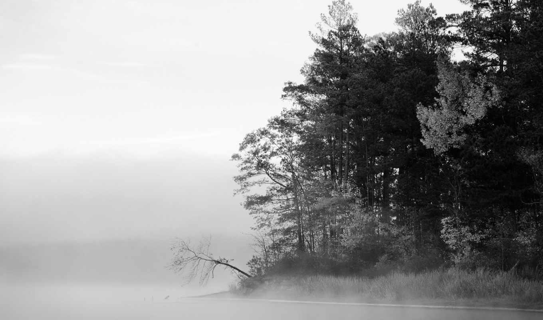 осень, лес, туман, foggy, густой,