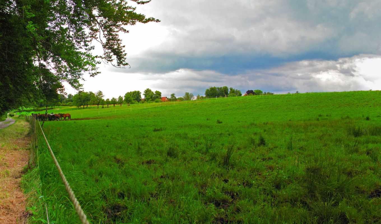 природа, зелёный, landscape, трава, zhivotnye, картинка, побережье, hdr, море, caribbean,