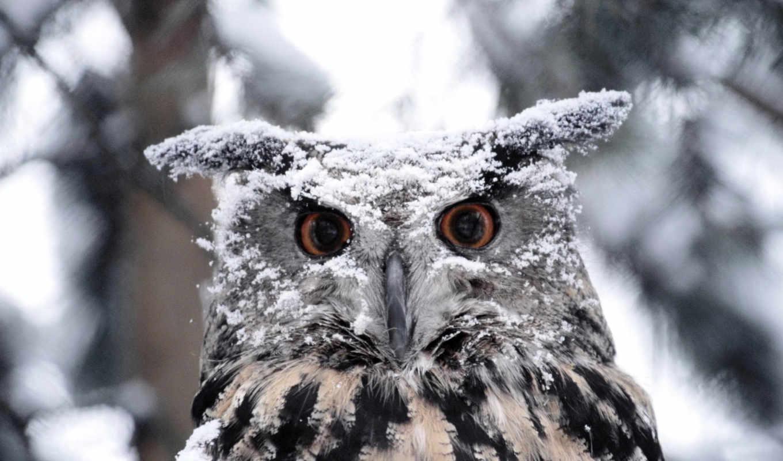 снег, фотографий, всегда, животных, снегу, снегом, zhivotnye, радуются, прыгают, бегают,