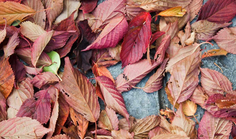 качество, природа, дерево, fore, цвета, resolution, leaf, design