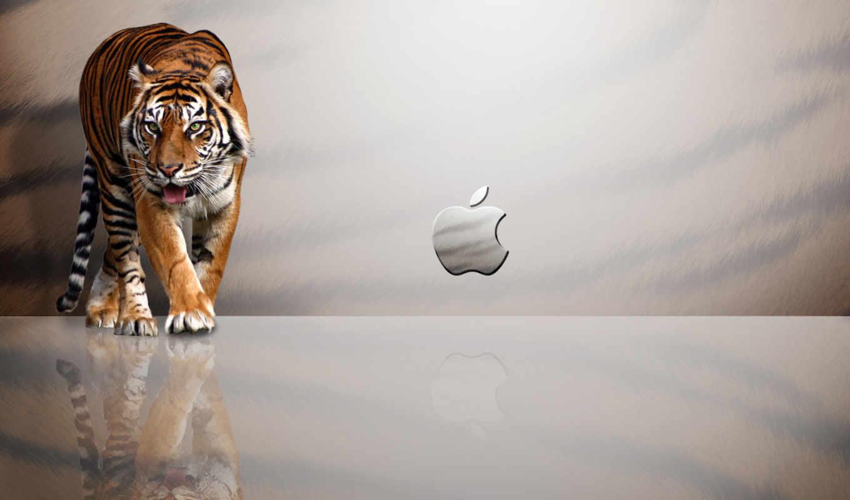 lion, тигр, apple, free, загрузок, white,