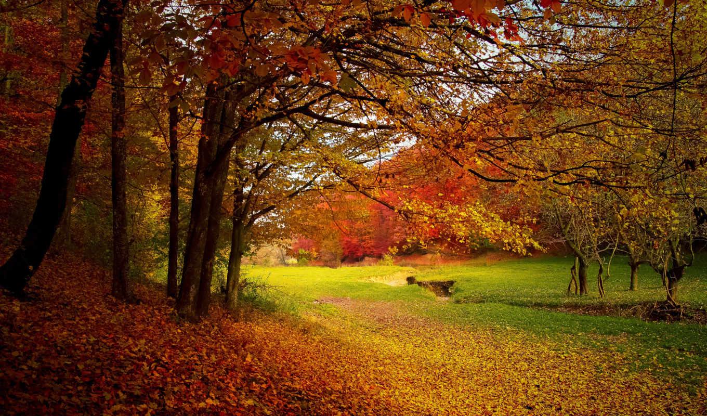 amor, frases, para, paisaje, nos, que, gratis, alma, dedicar,