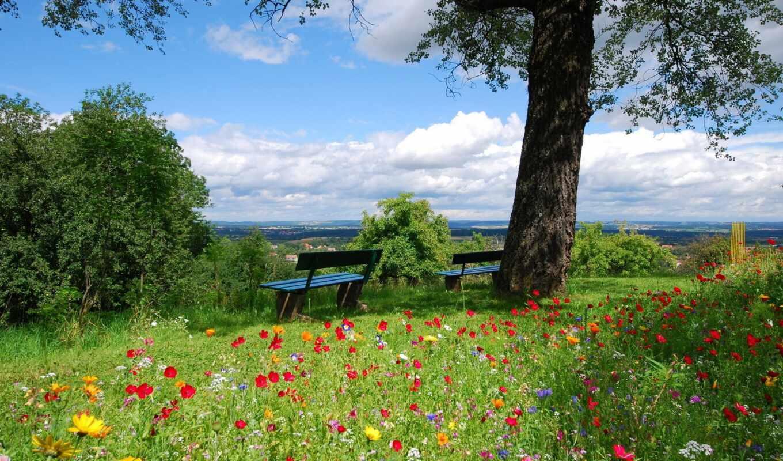 landscape, тени, две, природа, summer, видом, дерева, разных, пейзажи -, весна,
