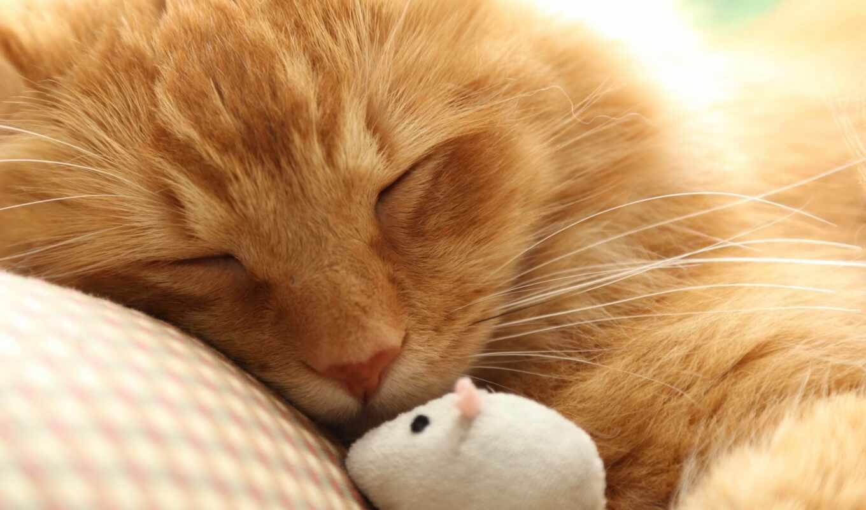 кот, mouse, спать, red, toy, row, makryi