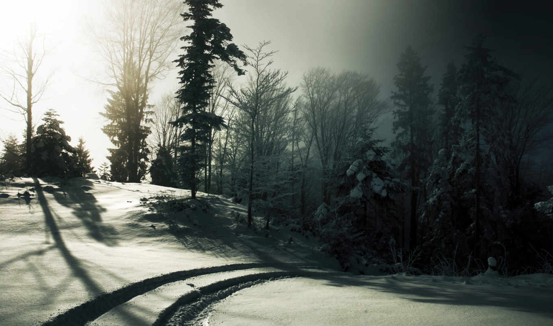 снег, деревья, солнце, зима, туман, следы, черно, белое, лес, экрана, номером,