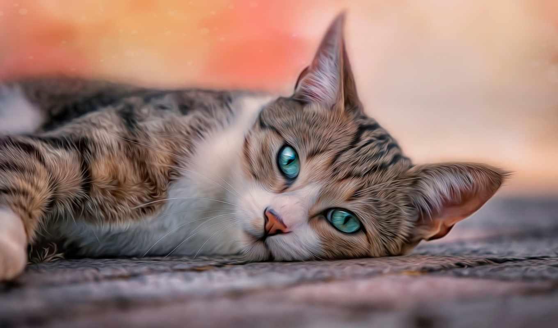 кот, глаза, лежит, серый, милашка