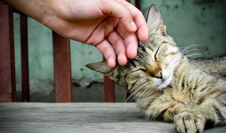 штрих, кошку, кота, свой, should, если, кот,