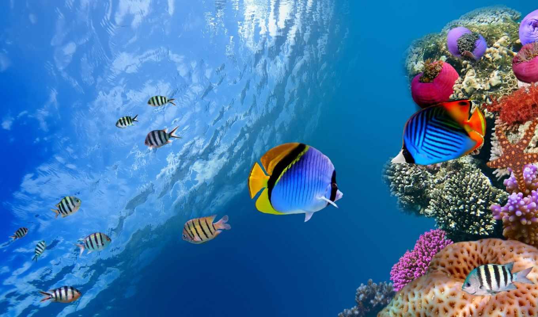 ecran, poissons, underwater, fonds, fish, fond, poisson, pinterest,