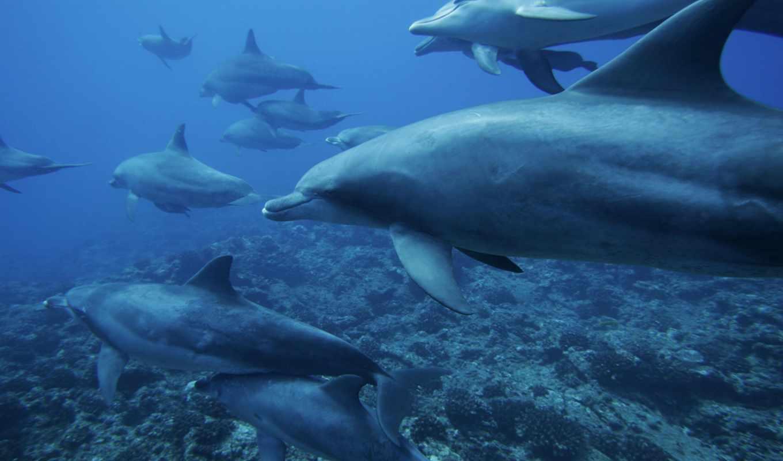 под, они, овцы, разных, водой, подводные, плывёт, дельфинов,