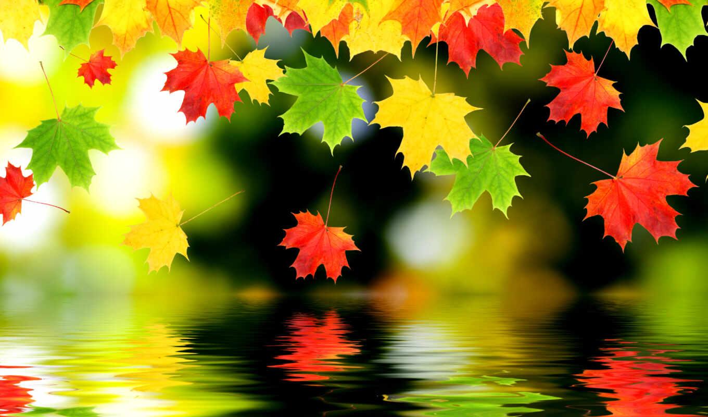 осень, красивый, лист, funart, вечер