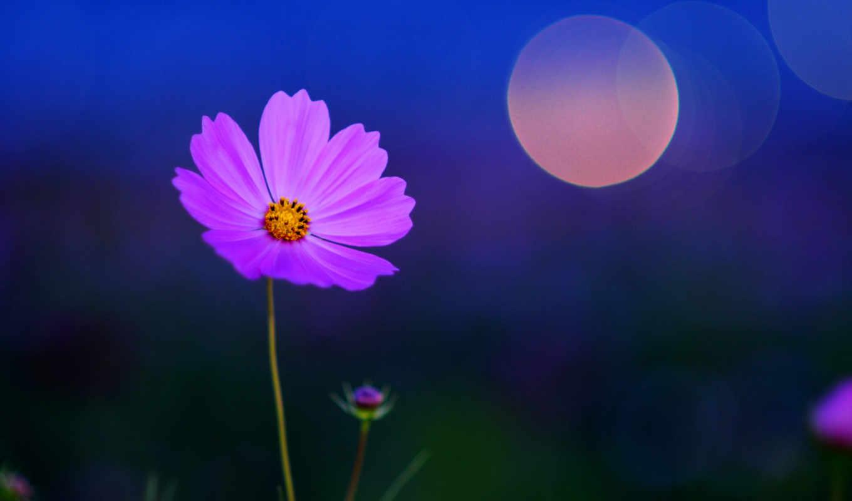 цветы, растительность, ночь, наклейки, июня, лепестки,