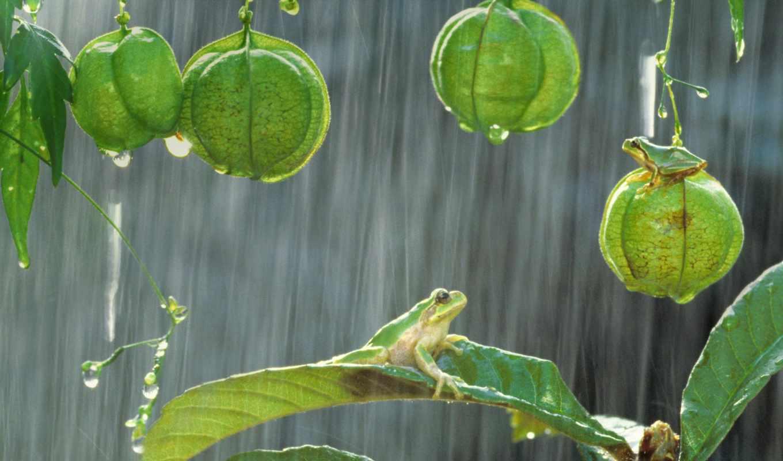 дождь, drops, zhivotnye, days, mobile, лягушки, rainy, теги,