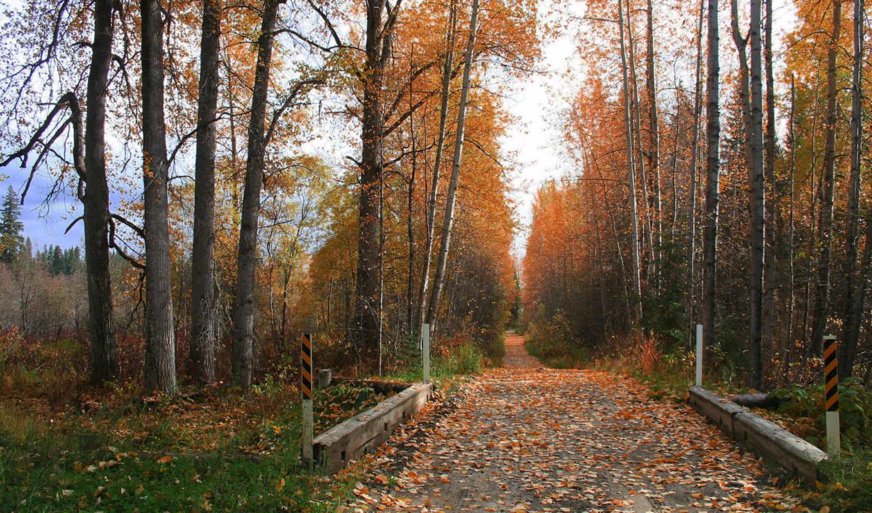 осень, листья, дорога, трава, деревья, смотрите,