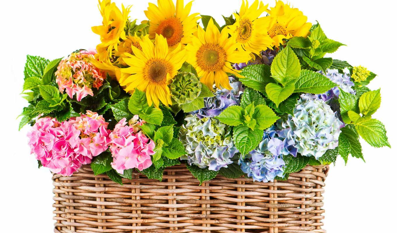 flowers, мб, гортензия, png, цветы, картинка, июня, bouquets, мыловарения,