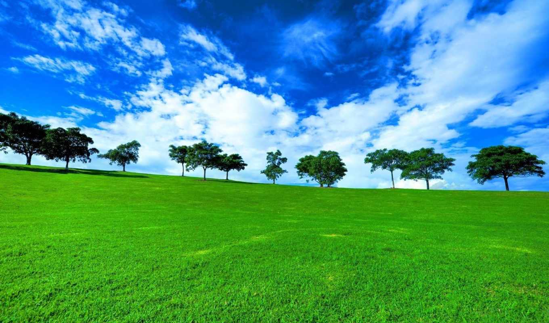 поле, трава, зелёный, деревя, природа, landscape, небо,