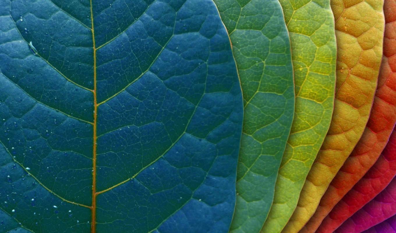 листья, лист, макро, градация, весь, векторные, hide, разноцветные, клипарты, показать, друзья,
