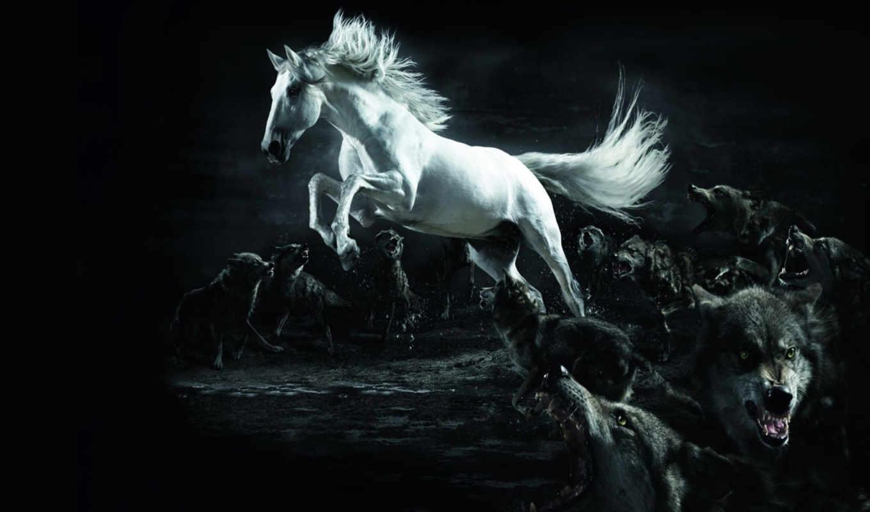 лошадь, волки, разное, волков, белая, компьютер, white, лошадей,