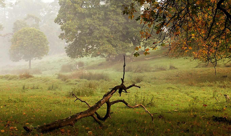 туман, осень, коряга, флот,