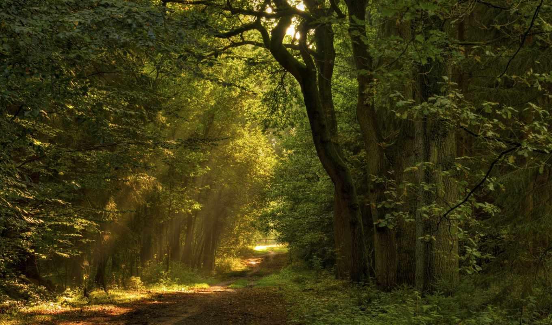 desire, листья, лес, деревья, природа, trees, sun, тропинка, colorful,