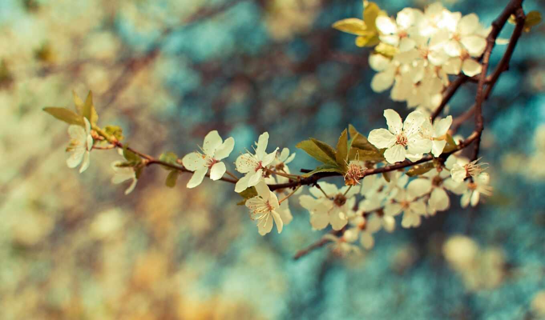 весна, цветы, листья, branch, макро, растение, года,