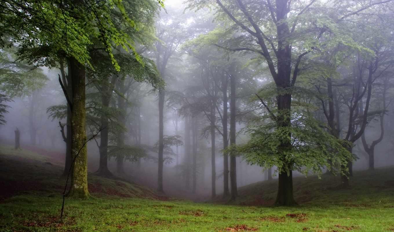лес, деревья, поляна, природа, туман,