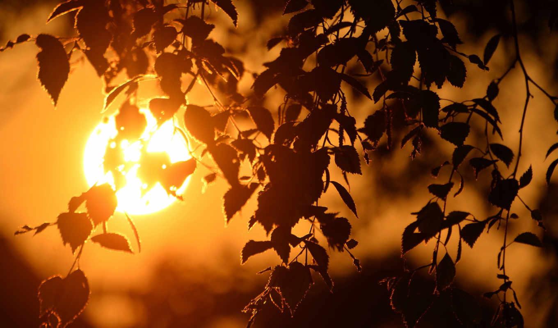 закат, береза, sun, ветви, диск, листва,