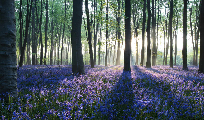 лес, more, save, день, об, see, arkansas, наши,