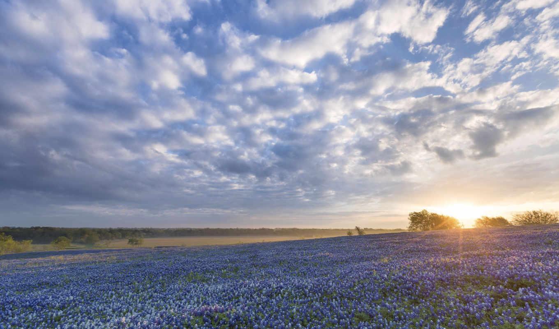 ennis, bluebonnets, garden, tx, this, texas, feng,