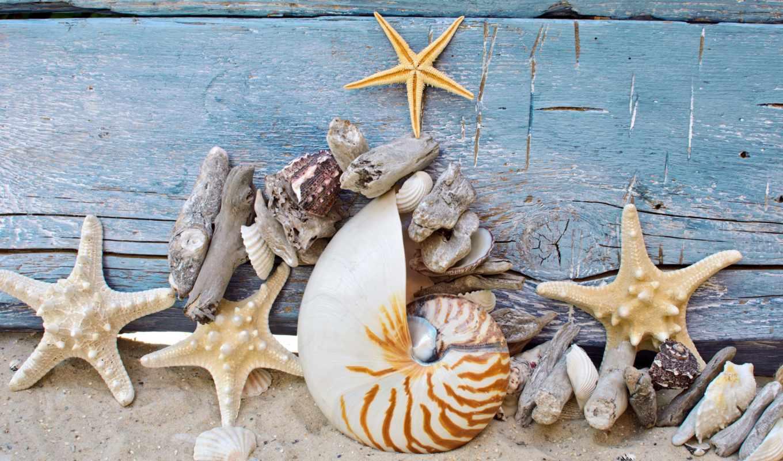 starfish, ракушки, морские, звезды, песок, marine, wood, ago, дней, seashells, заставки, портал, daily,