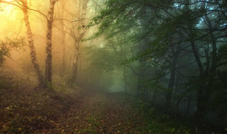 лес, сказочный, уже, февр, дорога, лесу, белые, карпаты, чехия, основном, фотографиях,