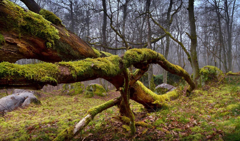 количество, природа, природы, мб,