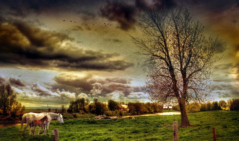 пейзаж, стиль, кони, поле,