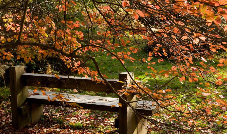 природа, осень, листья, пейзаж, дерево, скамейка,