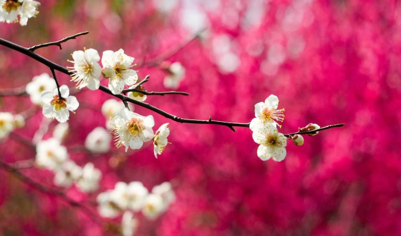 часть, весна,