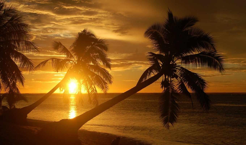 пальмы, пляж, природа, пляжи, вид,