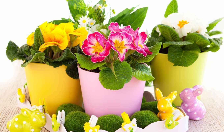 cvety, растения, горшке, цветок, садовые, весенние,