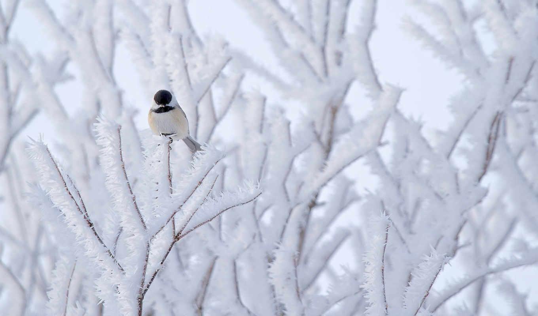 winter, птица, фон, small,