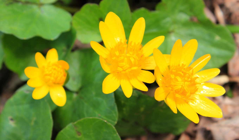 макро, makro, цветы, yellow,