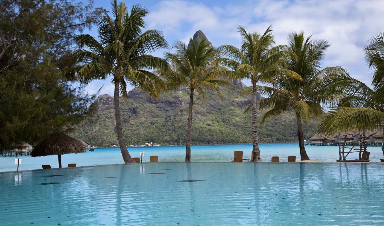 пальмы, бассейн, высоком,