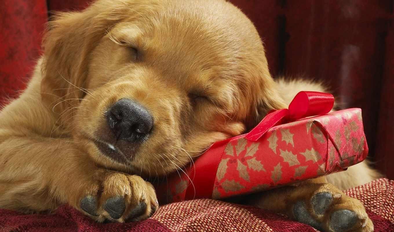 год, новый, собака, праздник, подарок, картинка,