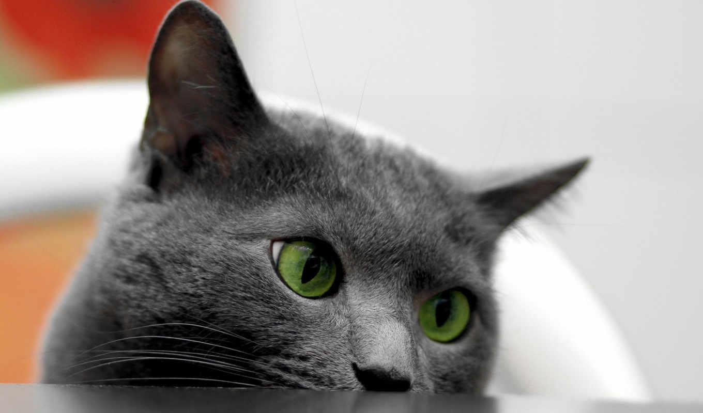 животные, iphone, будут, подборка, смотреться, прекрасно,