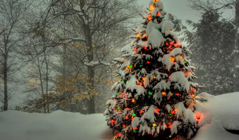 дерево, лесу, елки, новогодняя, объявление, продаже, наряженная,
