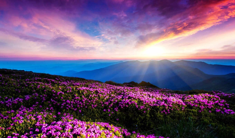 уровень, сокровища, пиратские, петя, гора, горы, ваших, падлов, цветы, за,