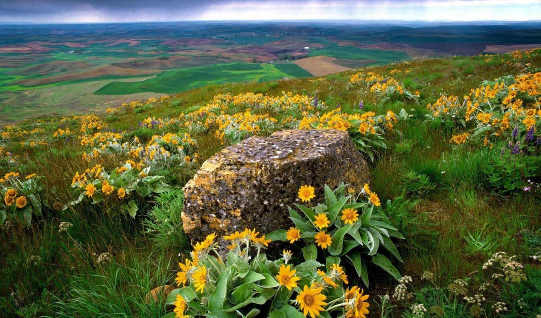 цветы, цветов, камень, макро, among,