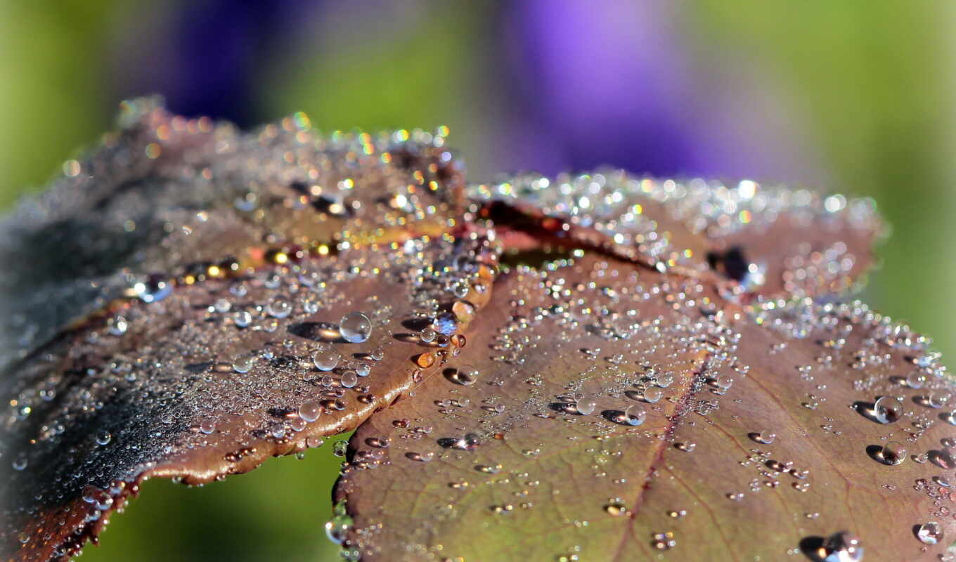 leaf, листочки, resolution, wet, raindrops, dewdrops,