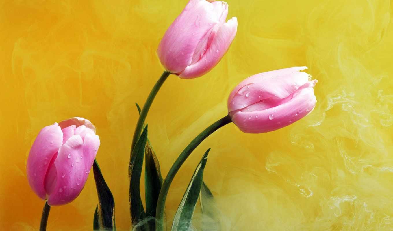 yellow, цветы, открытки, герберы, everything, рождения, день, случаи,