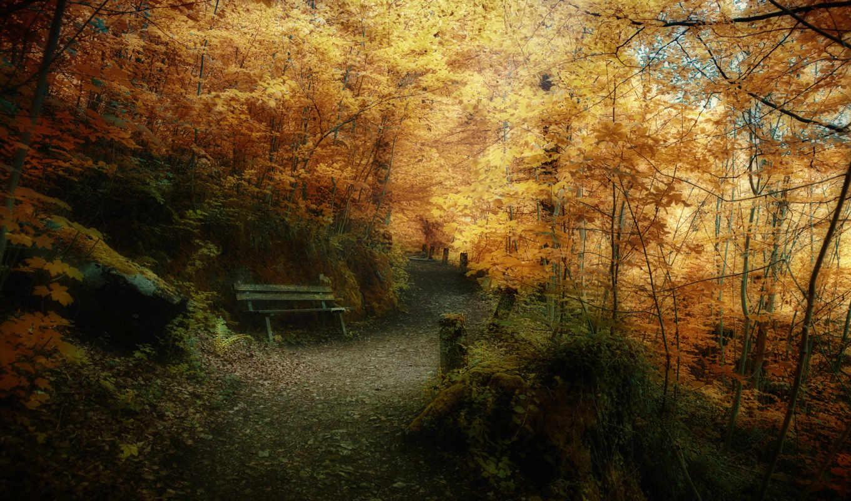 autumn, leaves, desktop, лесу, природа, правой, лес, мыши, картинку, кнопкой, уходящее, время, осеннем, парк, выберите, ней, скачивания, скамейка, деревья, tags, красивые, леса, тропинка,