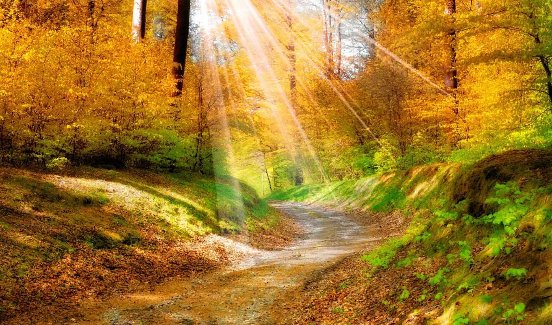 осень, природа, разделе, года, листья, лес, времена,